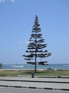 tree wb
